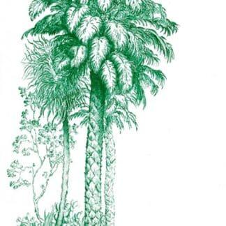 natier palmier vert émeraude